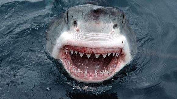 """هلع بشواطئ اكادير بسبب شائعة """"أسماك القرش"""""""