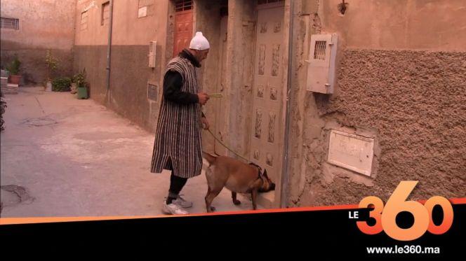 غلاف فيديو - كلاب مدربة تضع نهاية للأصوات الغريبة الصادرة من منزل بآيت ملول