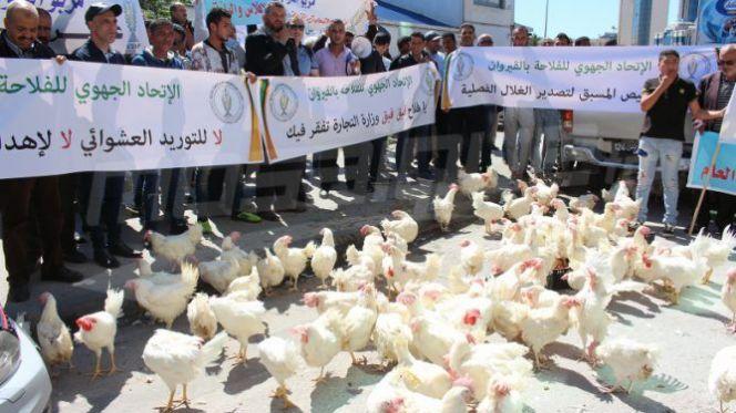 وقفة الدجاج بتونس