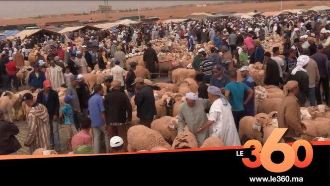 سوق بني مطهر للأغنام