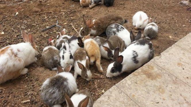 ضيعات الأرانب