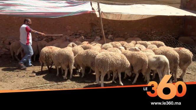 Cover_Vidéo: تعرفوا على تقاليد الوجديين في إحياء عيد الأضحى