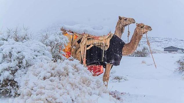 الثلوج تغطي الكتبان الرملية في الصحراء السعودية