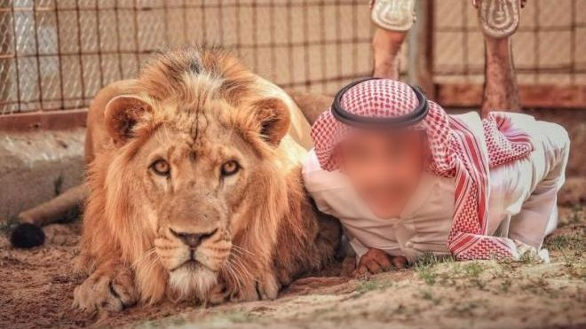 مصرع مواطن سعودي بهجوم من أسد