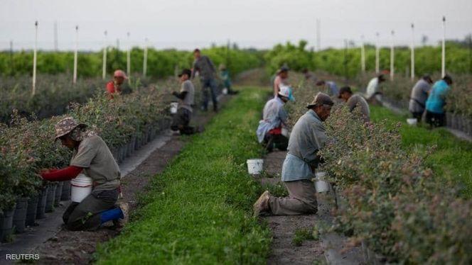 عمال زراعيون في إيطاليا