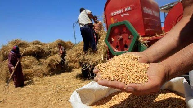 محصول الحبوب