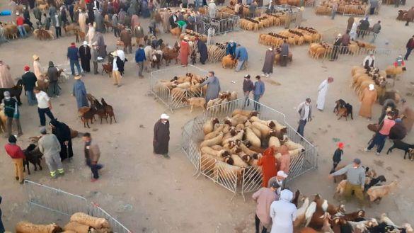 سوق الماشية بأجلموس