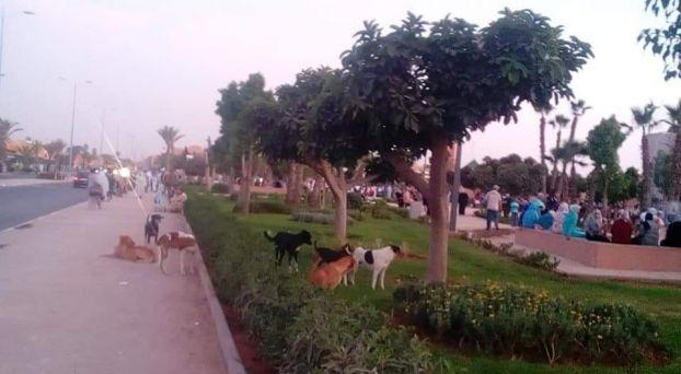 انتشار الكلاب الضالة بمدينة تزنيت