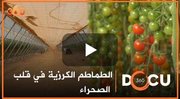 Cover_Vidéo: Docu360: مشروع لزراعة الطماطم الكرزية في قلب الصحراء المغربية