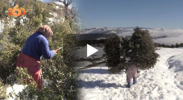 cover vidéo :Le360.ma •نساء الشاون يشقين بحثا عن التدفئة والكلأ وسط الثلوج