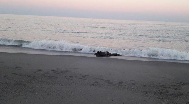 البحر يلفظ جثة