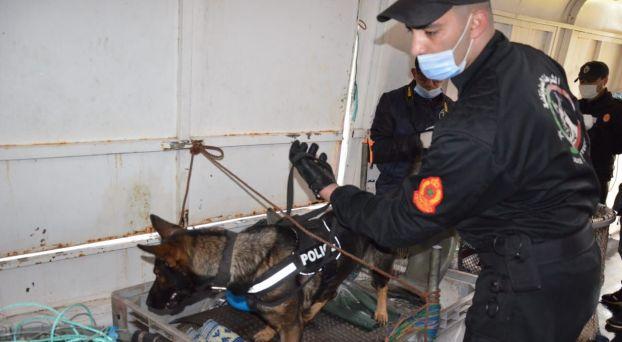 """حجز 7 أطنان من """"الحشيش"""" في عملية للتهريب الدولي للمخدرات عبر المسالك البحرية بالمهدية"""