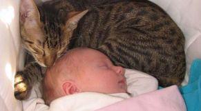قطة تنقذ رضيعا