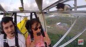 قطة طائرة