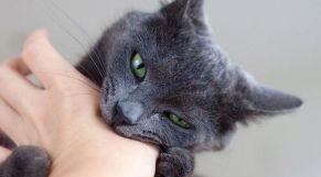 عضة قطة