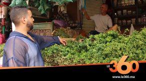 Cover_Vidéo: Le360.ma •روبورتاج: هل سيتخلى المغاربة عن النعناع بعد تحذيرهم من طرف مكتب أونسا؟