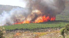 حريق غابوي بإقليم شفشاون