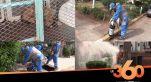 cover: هكذا يتم محاربة القوارض والكلاب الضالة بالدارالبيضاء
