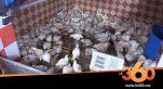 Cover_Vidéo: Le360.ma • روبورتاج : لهاته الاسباب ارتفعت أسعار الدجاج في الآونة الأخيرة