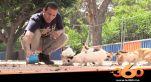 cover : قصة شاب تطوع لإطعام قطط وكلاب الشوارع في زمن كورونا