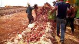 تخزين البصل بالحاجب
