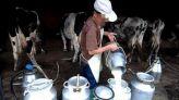 إنتاج الحليب
