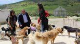 عمدة طنجة والكلاب الضالة 2