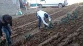 جزائريون يحرثون شارعا ويزرعون فيه البطاطس