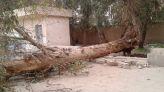 سقوط شجرة داخل مدرسة