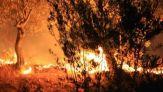 حريق بإحدى الغابات