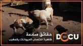 cover Teaser :Docu 360: حقائق صادمة حول ظاهرة اغتصاب الحيوانات بالمغرب