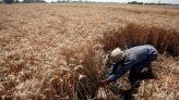 محاصيل الحبوب