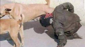 يرضع من كلبة