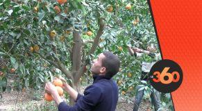 cover Video - Le360.ma • هوارة .. مملكة الليمون تصارع من أجل البقاء