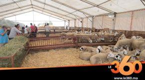 cover vidéo:Le360.ma •مغاربة يفضلون شراء خروف العيد بالكيلو