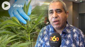 cover طبيب جراح يكشف المعجزة الخضراء للكيف بعد تقنينه
