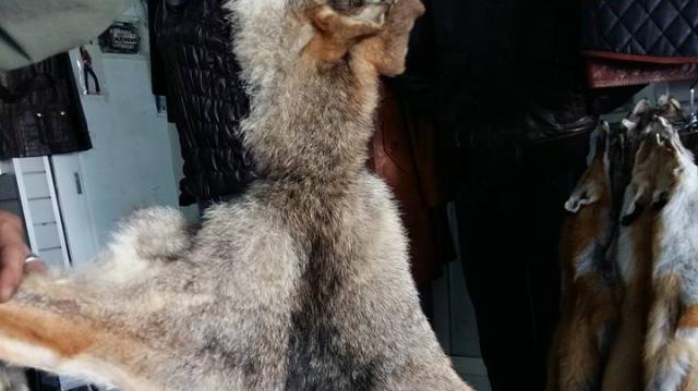 Peaux de renards