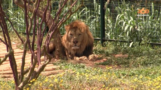 Cover Video -Le360.ma • Jardin Zoologique de Rabat