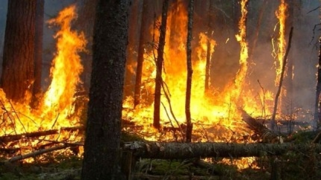 Incendie forêt Gourougou