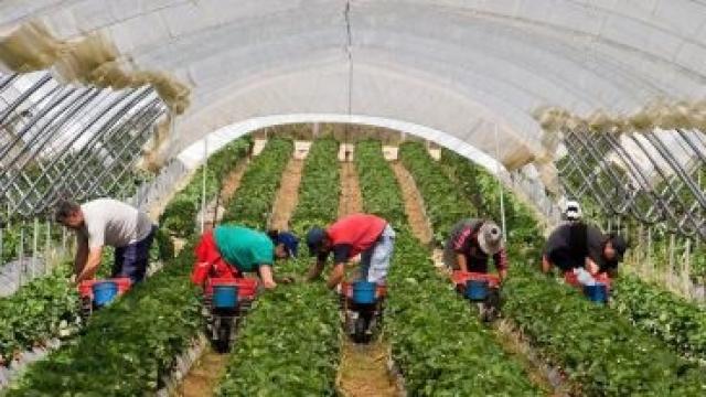 travailleurs saisonniers