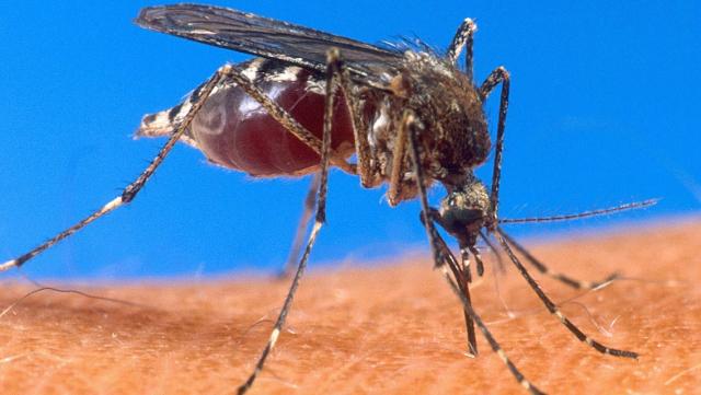 Sénégal. paludisme: vers une éradication de la maladie à partir 2020