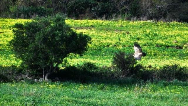 vautour3
