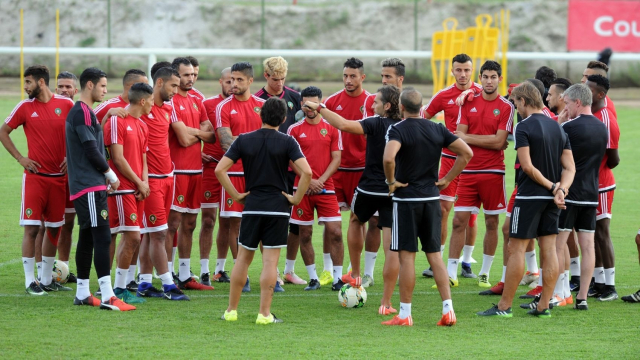 Lions entraînements