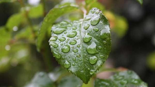 Agriculture et pluie