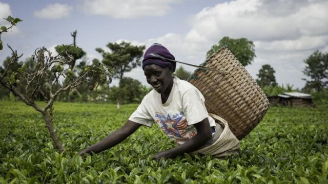 agriculture africaine