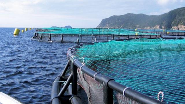 Aquaculture Souss-Massa