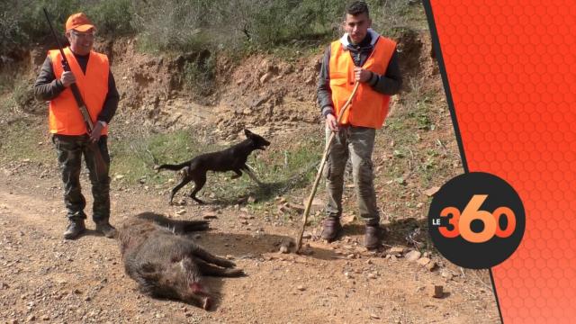 Cover Vidéo - Une battue pour déloger les sangliers à Benslimane