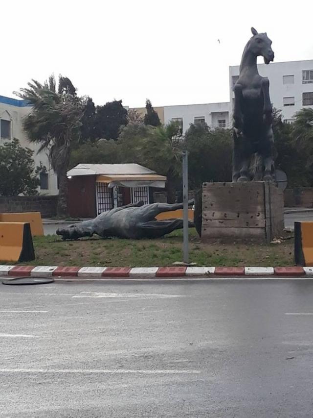 El Jadida: cheval de Chtioui Sahbi-2