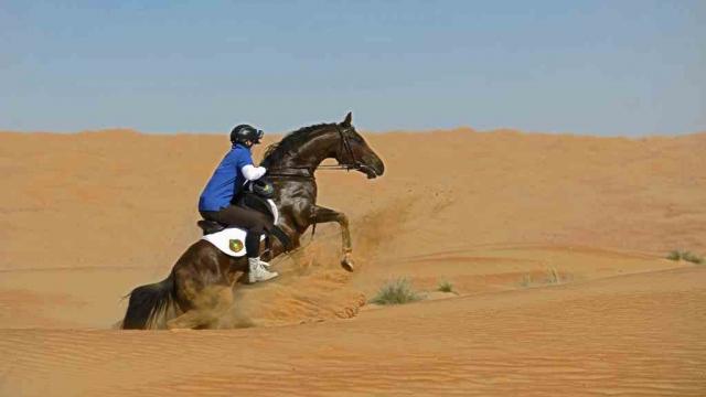 Gallops of Morocco