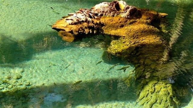 Source des poissons sacrés